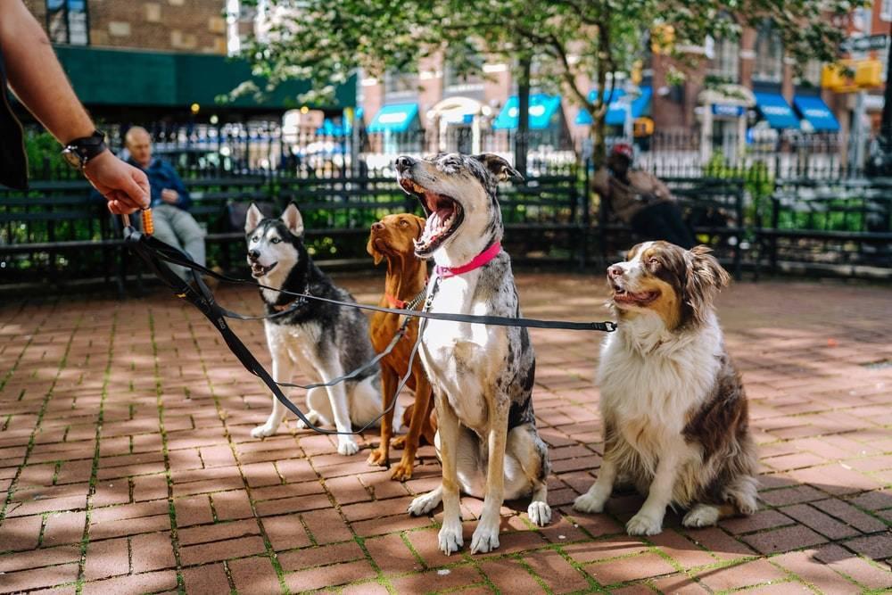 Vlasnici u šoku: Ministarstvo želi ovih 30 pasmina pasa staviti na popis opasnih