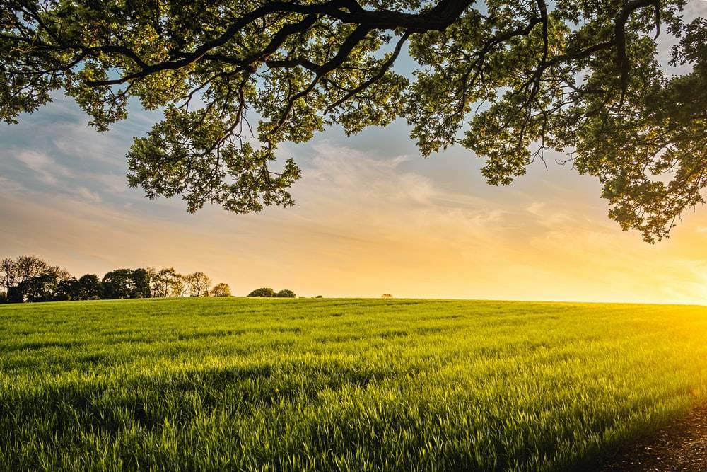 Poljoprivrednik ste i želite dodatnu zaradu? Novac je doslovno u zraku