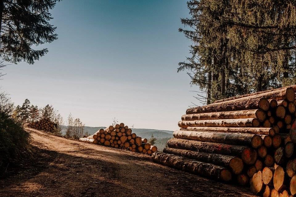 U tri krađe kod mjesta Gaj otuđena stabla hrasta i jasena