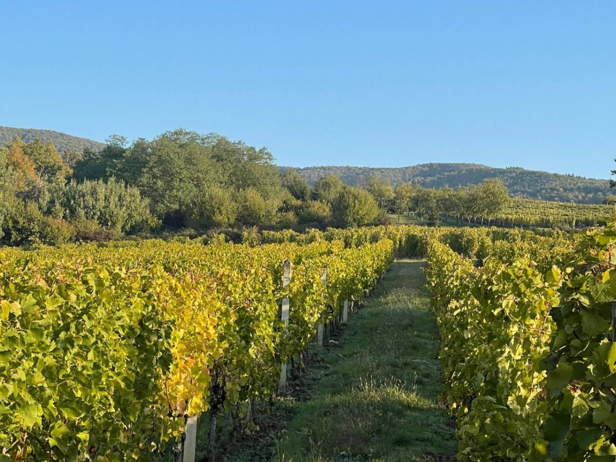 Niti jedna vinarija iz Požeško-slavonske županije NIJE ostvarila pravo na sredstva iz Nacionalnog programa