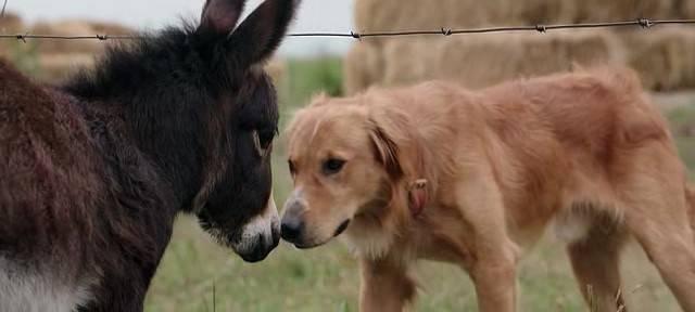 Projekcija filma za pomoć psima bez doma- ʺSmisao života jednog psaʺ