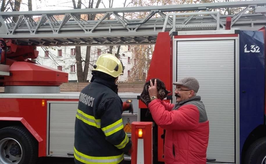 Intervencija vatrogasaca zbog mačke na drvetu ispred zgrade županije