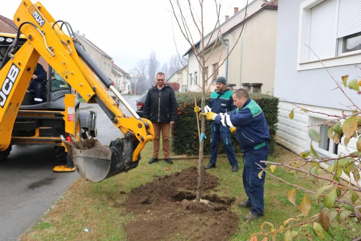 Požegu će krasiti 47 novih stabala i borova