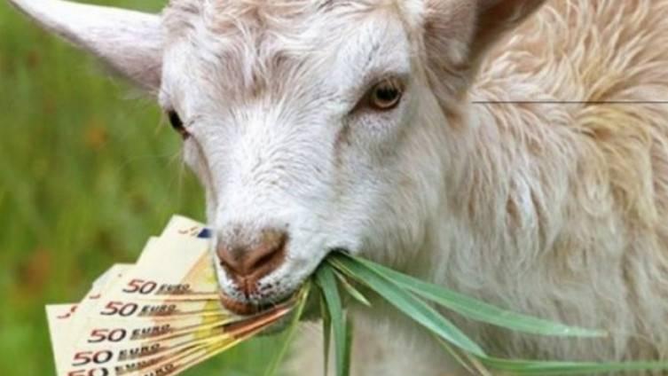 Koza Belka ušetala u kuću i sa stola pojela gotovo 20.000 eura!