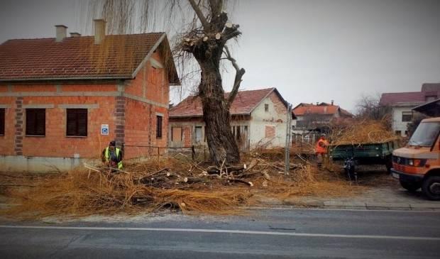 Što Lipičani misle o uklanjanju stabla vrbe u središtu Lipika