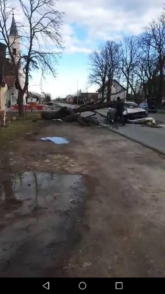 U Trnjanima drvo ʺpaloʺ na automobil, ima ozlijeđenih