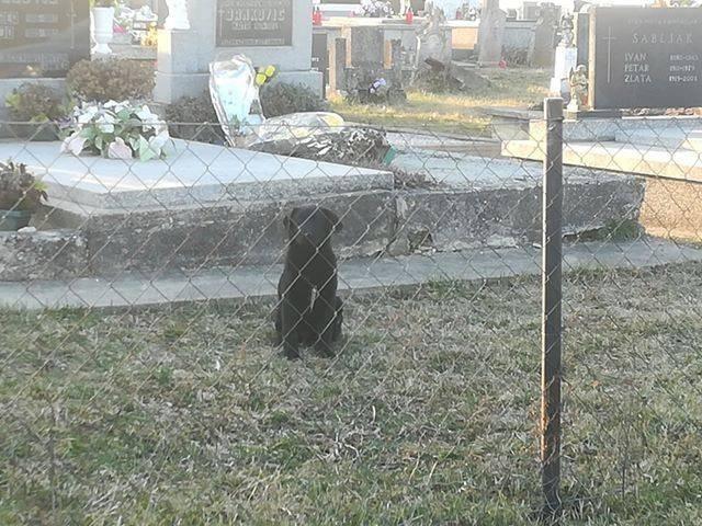 Netko je dva psića zatvorio iza ograde na alilovačkom groblju!??