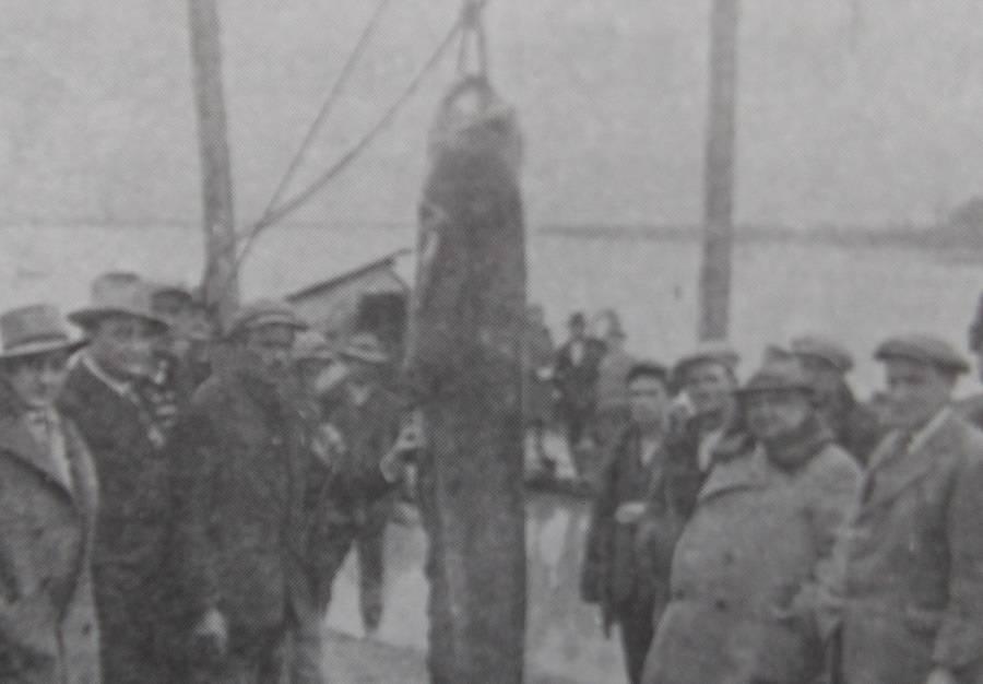 Neman iz Save staru 120 godina - desetorica ribara izvlačili su na površinu