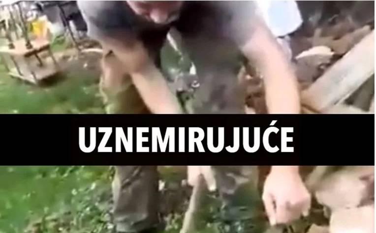 Širi se snimka ubijanja mačića u Slavoniji, o svemu se oglasila policija