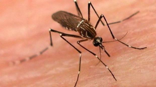 Obavijest - špricanje protiv komaraca u Lipiku