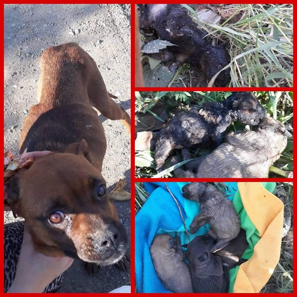 Netko je šest štenaca u Sl. Brodu polio benzinom i zapalio, dva štenca su uginula