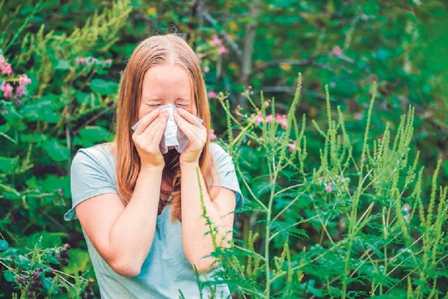 Prijeti nam pošast zbog ambrozije: Ako se alergija nekoliko sezona ne liječi, može se pojaviti alergijska astma