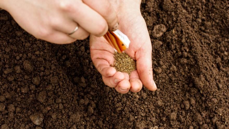 Saznajte trikove koji će vam pomoći pri sadnji povrća po vrućini