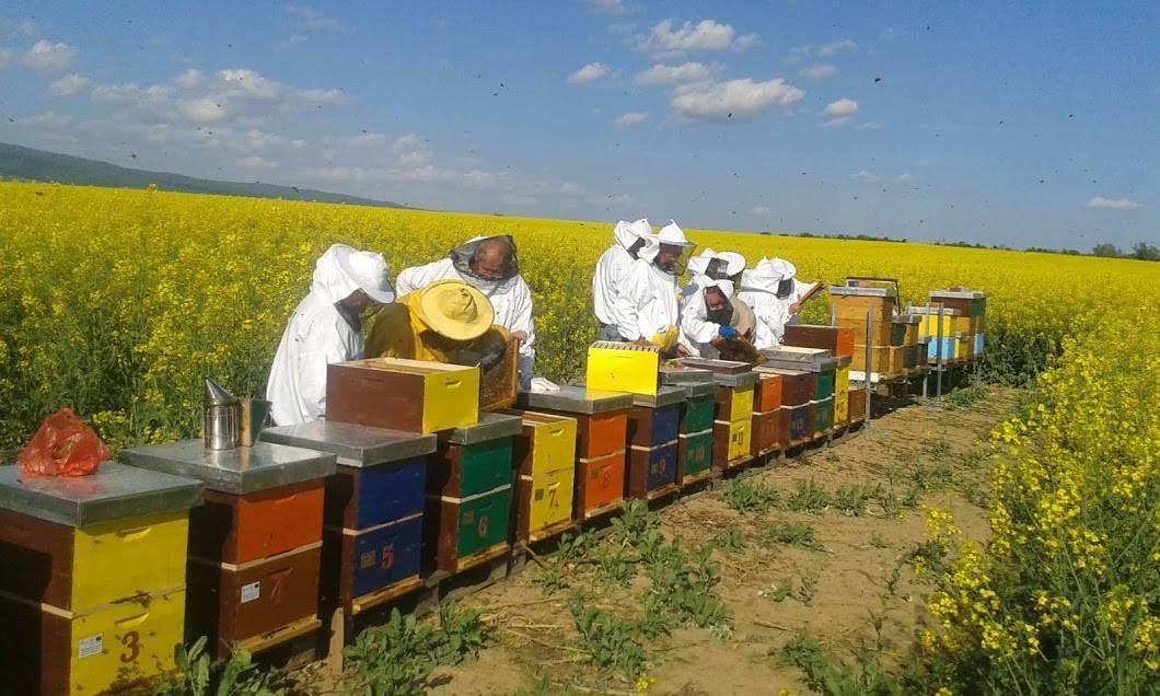 9.8.2019. Studijski posjet nezaposlenih osoba pčelarima u Bednju