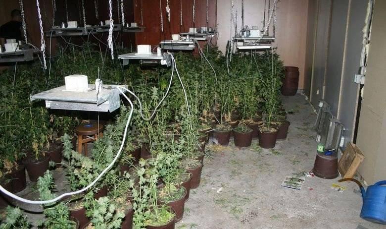 NE BAŠ TAKO DALEKO ODAVDE: U ilegalnom laboratoriju u obiteljskoj kući policija našla 'travu' vrijednu milijun kuna