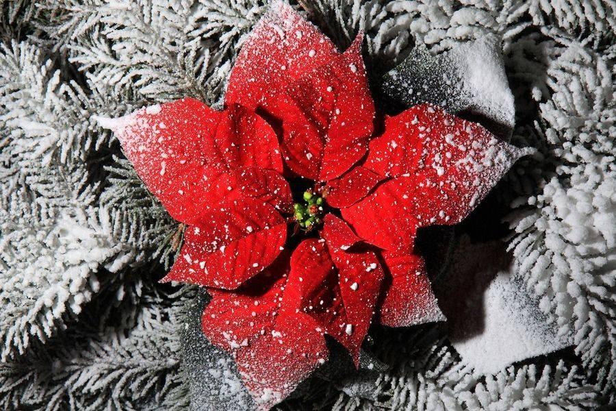 Donosimo vam neke od ideja uz koje će božićna zvijezda postati još ljepši ukras doma