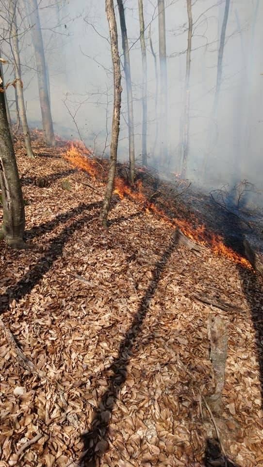 Veliki požar na Petnji