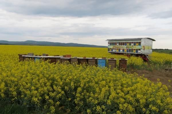 Pčelarima produženi rokovi za podnošenje zahtjeva za sufinanciranje za pčelarsku godinu 2020.