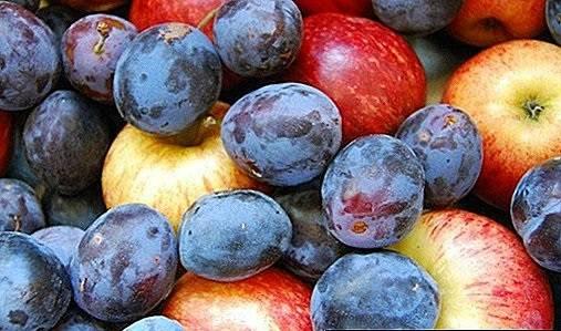 Pala proizvodnja jabuka, šljiva, krušaka...