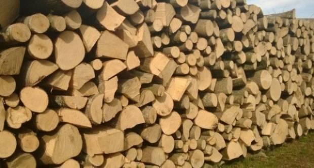 Pronađen kradljivac drva kod Pleternice