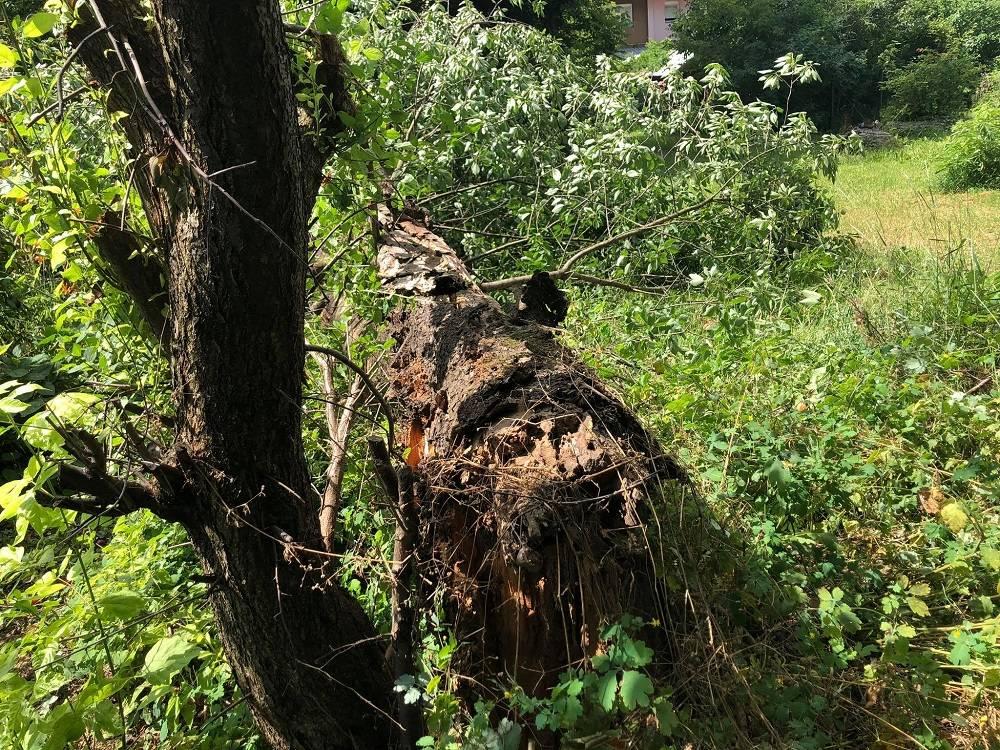 Posljedice jučerašnjeg jakog vjetra u Slavonskom Brodu