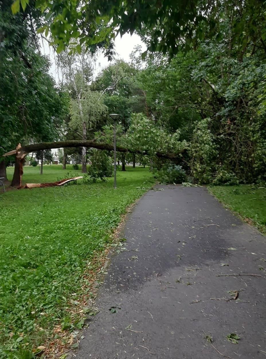 Jaki vjetar sinoć je lomio grane, a negdje je vjetar bio toliko jak da je srušio drvo