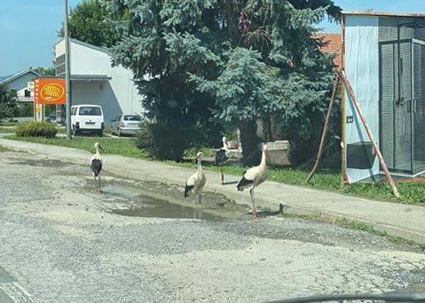 Vozači, budite na oprezu jer su u Brestovcu na cesti RODE!