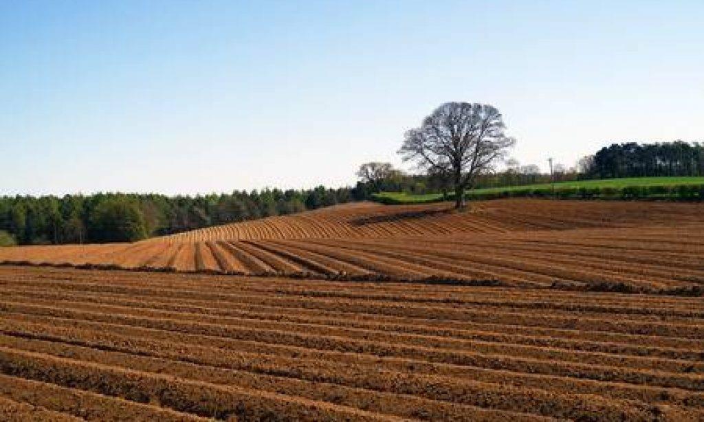 Objavljen natječaj za zakup državnog poljoprivrednog zemljišta