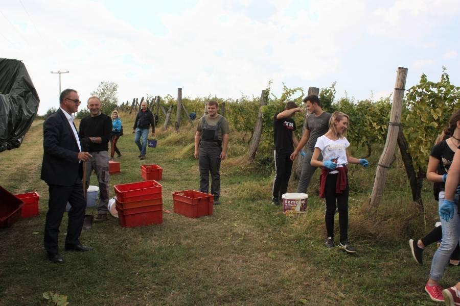 Berba grožđa Poljoprivredno - prehrambene škole Požega