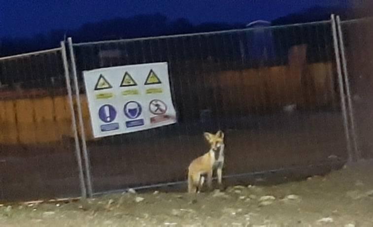Lisica se približila gradu