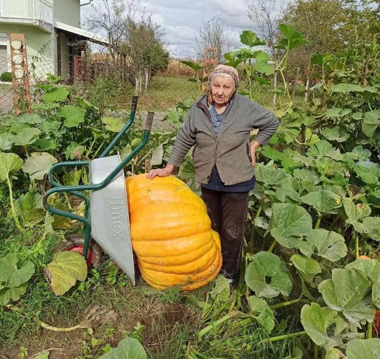 Baka Milka iz Eminovaca uzgojila mega bundevu tešku 120 kg