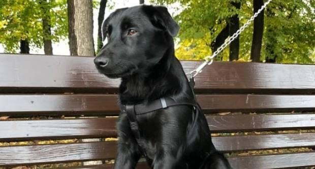 SIRUS: ʺMolimo ljude dobrog srca i ljubitelje životinja, koji su u mogućnosti, da udome ovu ljepoticuʺ