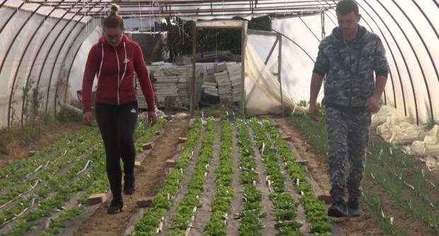 OPG Zubović iz Skenderovaca kao primjer dobre prakse uzgoja povrća s organskim gnojivom