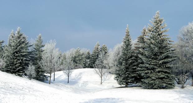 Kvalitetnim odabirom božićnog drvca imat ćemo dulje ugođaj blagdana u našem domu koji će nam svima trebati u ova izazovna vremena
