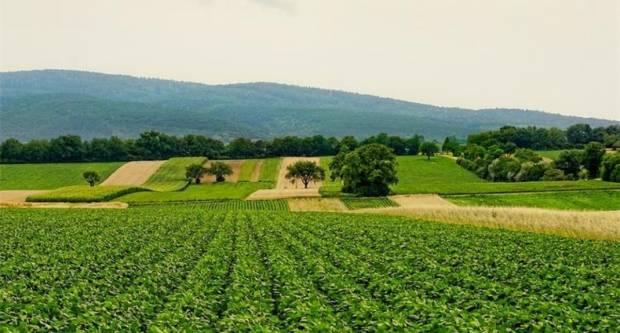 U 2021. godini za korisnike Programa ruralnog razvoja osigurano više od 2,4 milijarde kuna bespovratnih sredstava