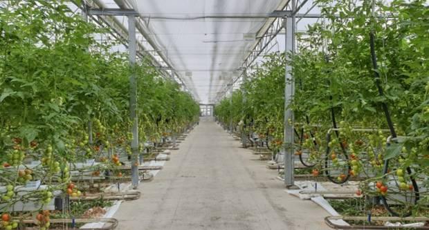 Objavljen Natječaj vrijedan 150 milijuna kuna za proizvođače povrća u plastenicima