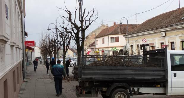 Hortikulturalno uređenje grada: Počelo proljetno orezivanje drvoreda u požeškim ulicama