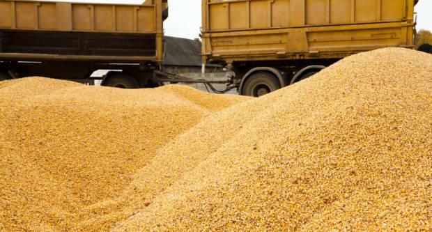 I u prvom mjesecu 2021. rasle cijene hrane, kukuruz prednjači