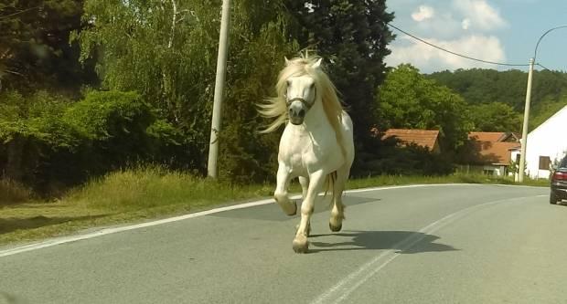 FOTKA DANA: Netko izgubio konja?