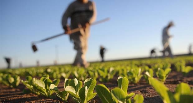 Grad Lipik objavio Javni poziv za podnošenje zahtjeva za dodjelu potpora u poljoprivredi