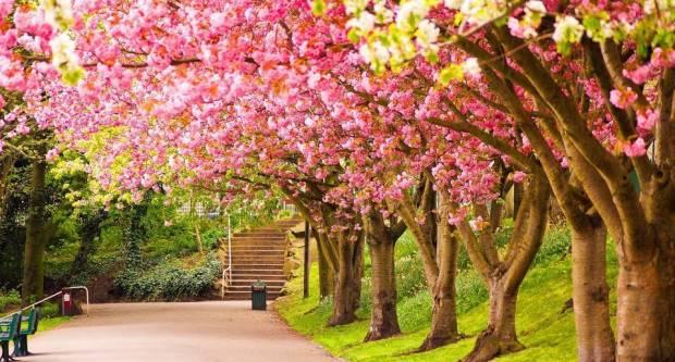 Dolazi proljeće! Temperature će rasti i do 20 stupnjeva, za vikend prolazna kiša