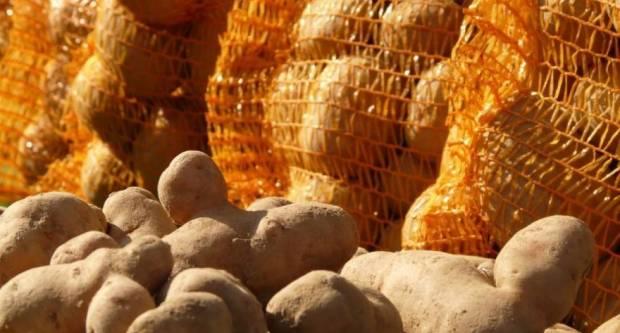 Domaći proizvođači: Trgovine su pune lažnog mladog krumpira