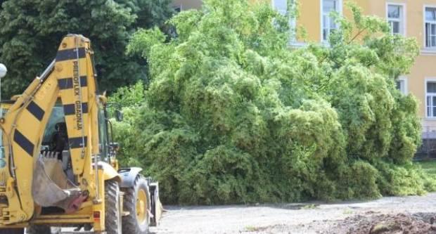 VREMEPLOV: Na današnji dan prije pet godina posječena su stabla na Trgu sv. Terezije