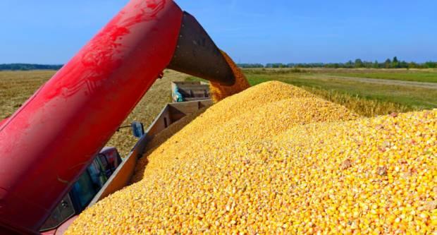 Kukuruz skuplji od pšenice - razlog velika kupnja Kine i suša u Brazilu?