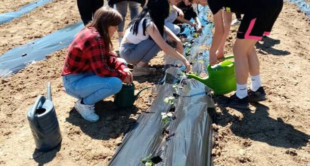 Poljoprivredna škola: Sadnja batata u školskom povrtnjaku