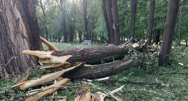 Nevrijeme  polomilo drveće u Zvečevačkom parku