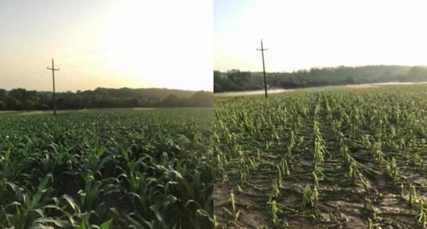 Ništa od državne naknade poljoprivrednicima Požeške kotline koji imaju osigurane usjeve?