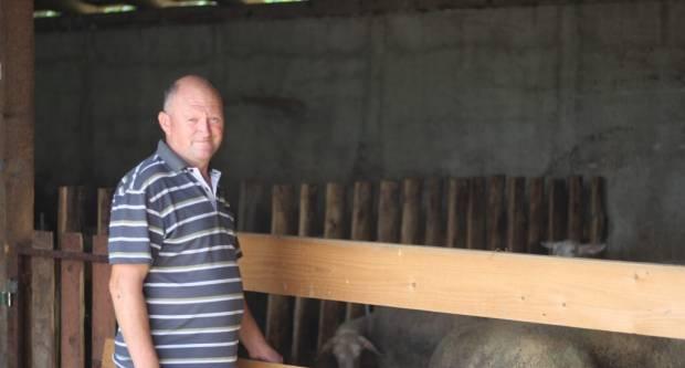 Obitelj Gomerčić iz Vetova dugi niz godina bavi se ovčarstvom i vinogradarstvom