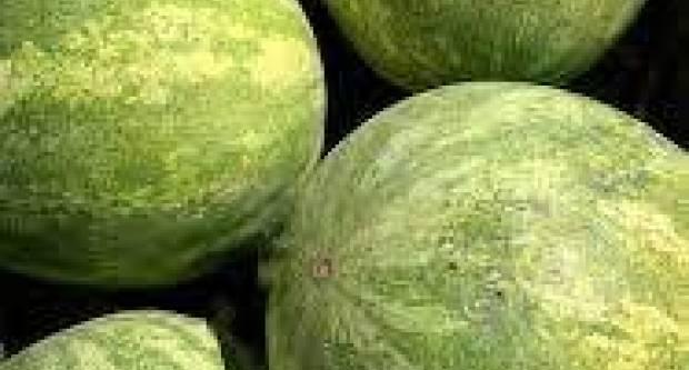 Bračni par u Baranji uzgaja i prodaje lubenice na povjerenje! Ako nemate novca, donijet ćete ga drugi put