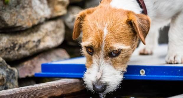 Par kapi vode može spasiti neke životinjice po ovim vrućinama, no u nekim mjestima bi vas to moglo koštati i par stotina kuna